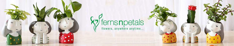 Ferns N Petals Header