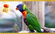 Small birds & animals