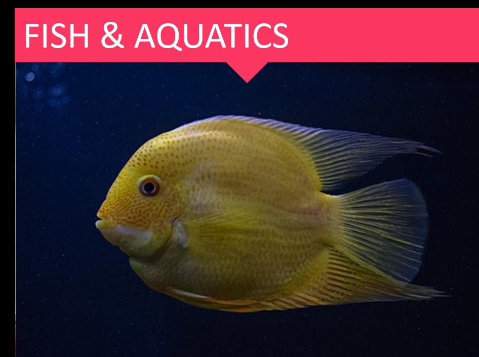 Fish & Aquatic