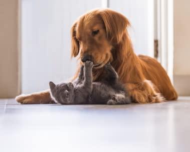 Alles voor je huisdier