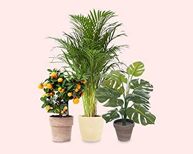 Planten en meer groen