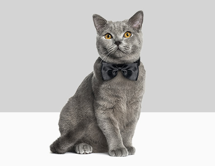 Kattenkleding