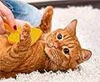 تزيين القطط