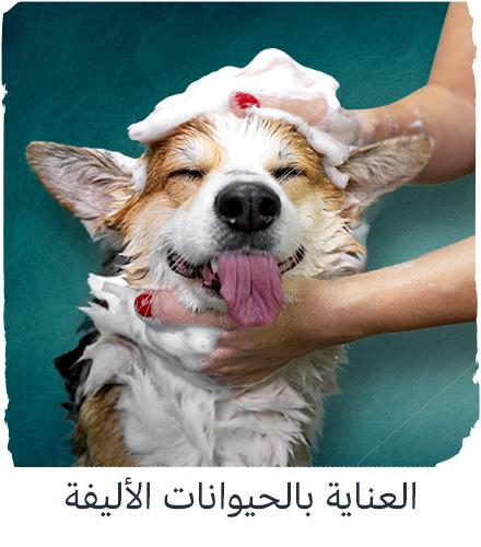 تزيين الحيوانات الأليفة - في موقعك