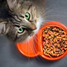 Pet supplies | Food & treats