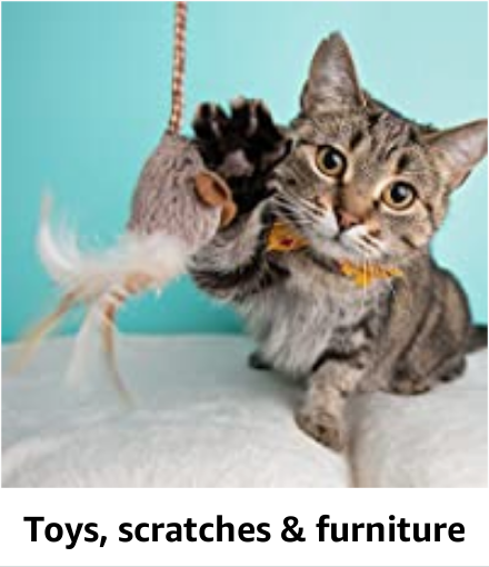 Toys, Scratches & Furniture