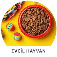 Evcil Hayvan