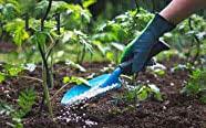 Växtvård