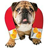 Rasta Imposta Zelda Chick Magnet Hund Outfit Funny Thema Halloween Pet Kostüm, XL/XXL, Red/Silver/Yellow