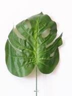 Künstliche–Blatt Philodendron Künstliche H 75cm D 25cm Stoff