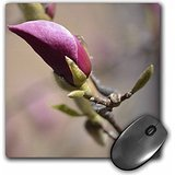 patricia-sanders-flowers-newest-blossom-spring-pink-tulip-tree-flower-mousepad-mp-50556-1