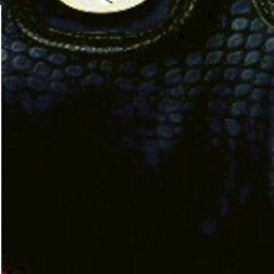 Alessandro NEW FASHION 4013 Handbag Damen Henkeltasche Schultertasche mit Handyfach und RV-Rückfach in 3 Farben ca. 36/21/12 cm Braun/Lila