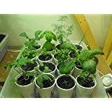PLAT FIRM GERMINATIONSAMEN: Herb & Spice Lovers 16 Variety Seed Pack Collection Petersilie Salbei Rosmarin Thymian
