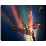 MSD Natural Rubber Gaming Mousepad IMAGE ID: 869297 Estrelicia Bird of Paradise Lily can grow up to 5 feet in height The banana shaped blue green leaves are attached to a long stem that sometimes can -