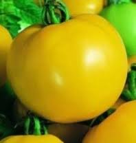 heritage-heirloom-golden-sunburst-yellow-salad-tomato-seeds-certified-french-organic-grower