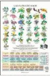 Flores de Bach (Terapias Láminas)