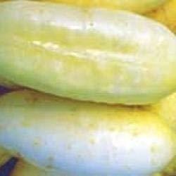 Seekay Concombre Blanc Wonder - 100 Graines - Légumes