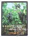 La puglia dell'uva e del vino