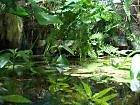 Pflanzenset für Regenwald Paludarium Terrarium (Regenwald Pflanzen)
