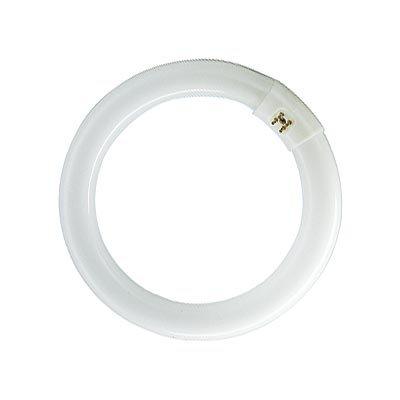 Circline-lampe (Lampe Circline, 22 W, Typ LC22W/865)