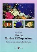 Fische für das Riffaquarium: Beliebte und gut zu haltende Arten