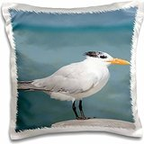 cindy-miller-hopkins-birds-belize-caribbean-sea-belize-city-wild-royal-tern-on-pier-16x16-inch-pillo