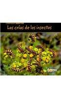 Comparar Insectos (Comparar insectos / Comparing Bugs) por Charlotte Guillain