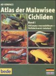 Atlas der Malawisee Cichliden 1. 2 CD- ROM für Windows ab 95. Alticorpus macrocleithrum - Pallidochromis tokolosh