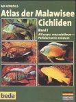 Atlas der Malawisee Cichliden 1. 2 CD- ROM für Windows ab 95. Alticorpus macrocleithrum - Pallidochromis tokolosh