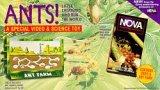 Preisvergleich Produktbild Ants [VHS]