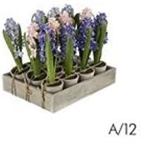 Sia Home Fashion Pianta Giacinto In Vaso 25cm Blu / Celeste / Fuxia Assortiti