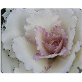 Luxlady Gaming Mousepad foto ID: Avorio e cavolo 22962101 del Regno Unito, colore: rosa