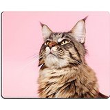 msd-natural-rubber-gaming-mousepad-image-id-29443512-portrait-pedigree-maine-coon-cat-on-pastel-colo