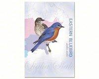 Eastern Bluebird Eco Notes