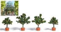 busch-6619-zitrusbaume-4-stuck-187