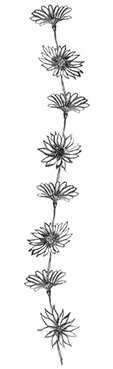 daisy-chain-temporary-tattoo-premium-quality-die-cut-transfer