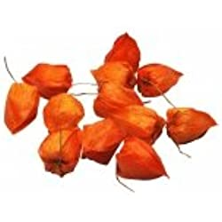 BG Trading Deko Physalis orange 5cm 12Stk