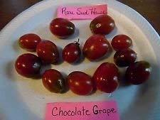 hokolade Tomatensamen - Lasten von Obst Comb. S/H Unser Shop anzeigen ()
