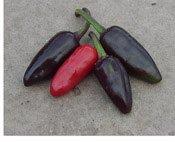 Just Seed Gemüse Chili/Chilli Pfeffer Schwarz Pequin, ungew hnlich, 10 Samen