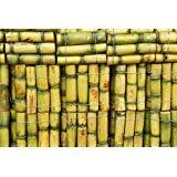 PLAT FIRM GERMINATIONSAMEN: 200pcs Zuckerrohr Samen Seed Rum Sirup Kandiszucker Crystals