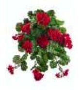 fbg923-re-32-po-wr-g-ranium-pack-de-hg-rouge-bux10-de-6