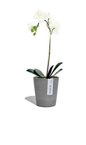 Ecopots Blumentopf Morinda Orchideentopf | 14 x 16 cm | aus Kunststoff | Ökologisches Pflanzgefäß für innen und außen | grau