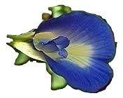 Clitoria Ternatea, Schmetterlingserbse, Schamblume, 10 frische Samen blau