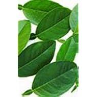 Fresh Thai Kaffir Lime Leaves (75g)
