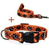 RYPET Halloween-Hundehalsband und Leine - Halloween-Kürbis-Muster, Verstellbare Halsbänder für Hunde, M:11''-16'', Halloween Pumpkin