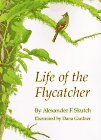 Life of the Flycatcher