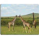 MSD Natural Rubber Gaming Mousepad IMAGE ID: 3396761 Three African giraffe in Masai Mara Kenya Africa - Masai Giraffe