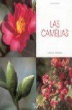 camelias-las-cultivo-y-cuidados