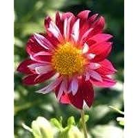 FES Quintessentials Flower Essences Services Peppermint 30ml Dosage by Natures Wisdom preisvergleich bei billige-tabletten.eu