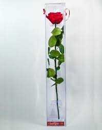 rosa-natural-color-rojo-preservada-en-estuche-conservacion-envio-urgente-24h-ahora-con-tarjeta-con-n
